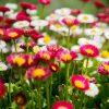 flowers-garden-featured